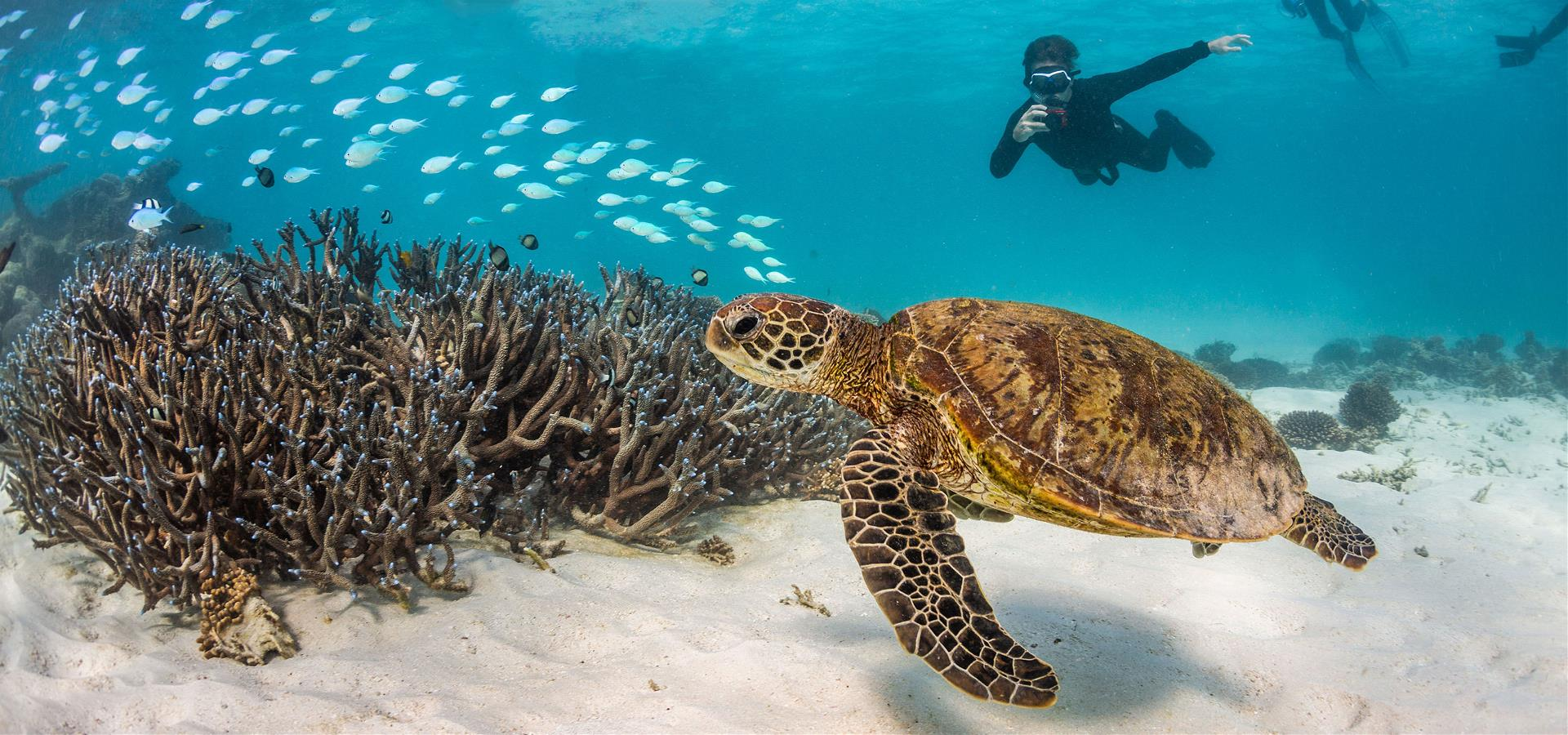 Murdoch students diving with giant turtle