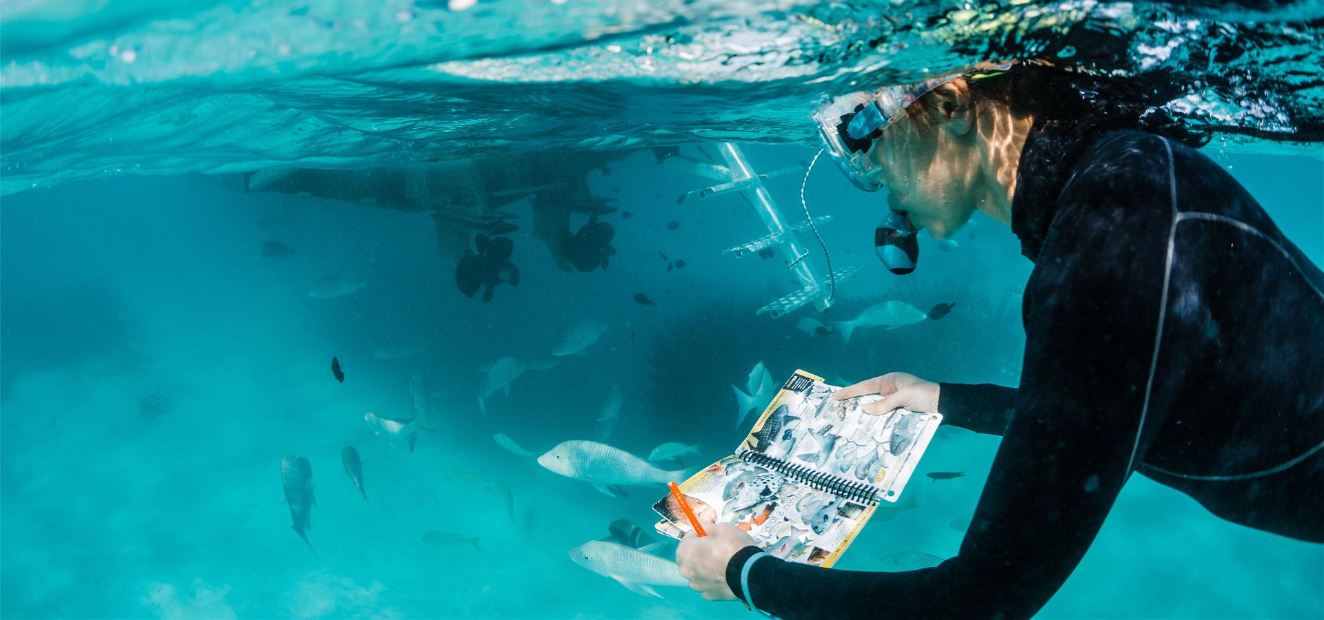 Student observes chart of fish while snorkelling