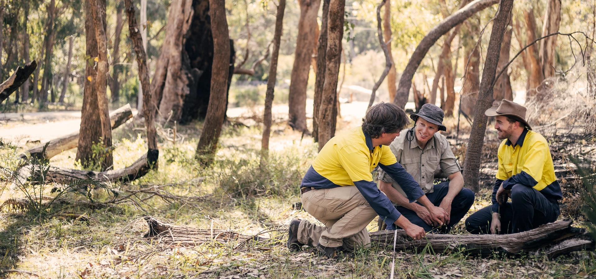 Researchers working together in the bushland