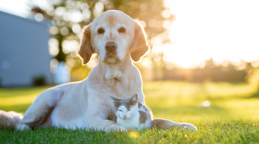 a cat and a dog relaxing together on the lawn in the sun