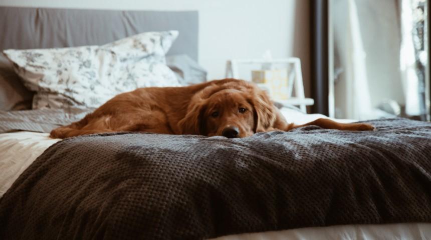 Dog sitting on bed