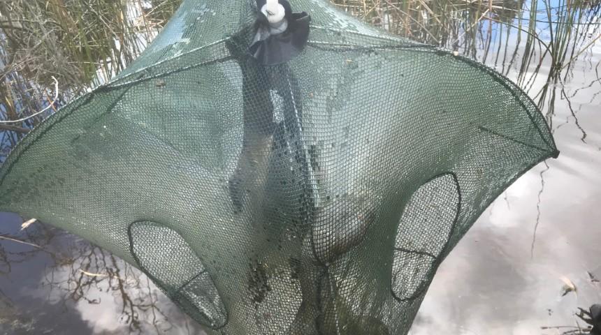 illegal fish trap