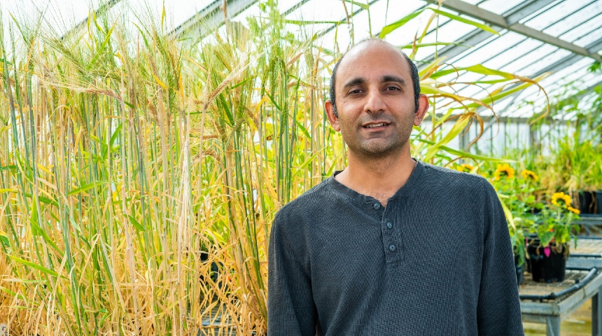 Dr Jatin Kala standing in a greenhouse with barley