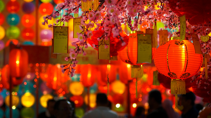 Red lanterns among cherry blossom trees