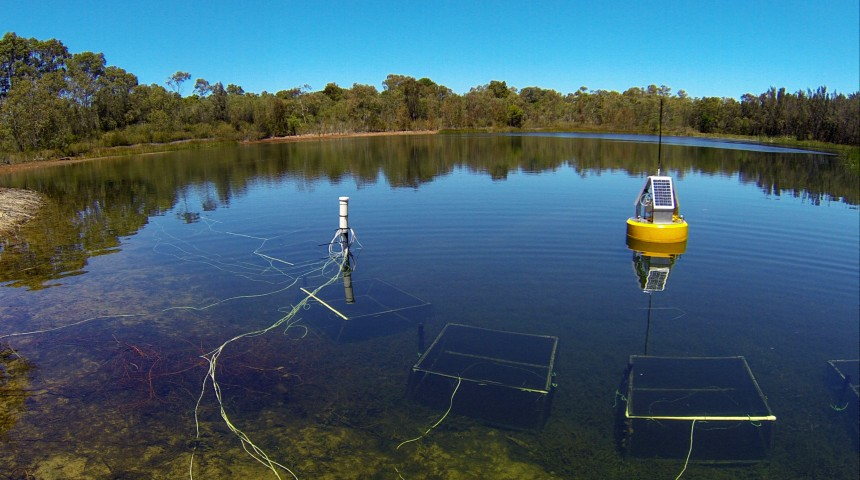 Mussel cages in the Iluka wetlands
