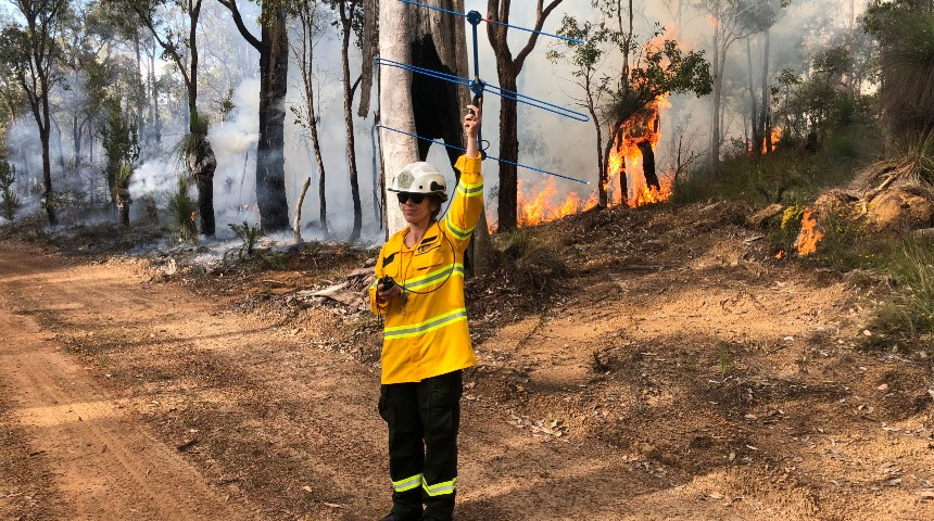 Researcher uses a tracking device to track quokkas during a prescribed burn