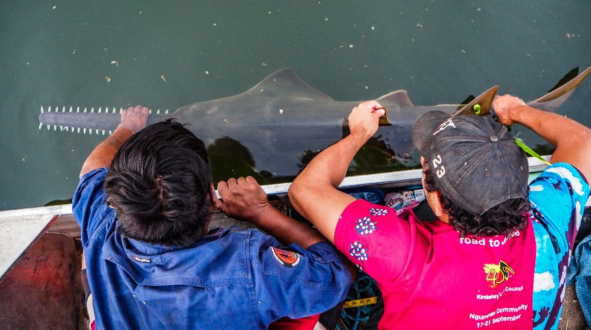 Two people handling a sawfish off a boat