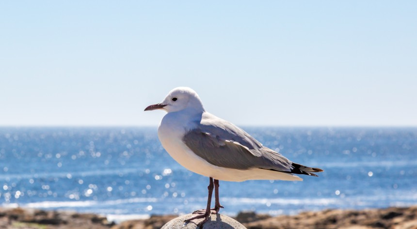 Seagull standing on a pylon