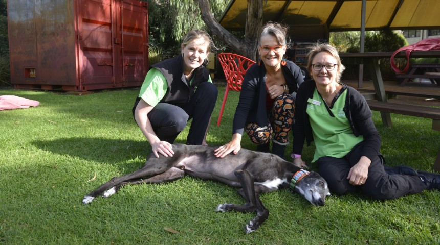 Animal Hospital staff and donor dog owner with Archie the greyhound