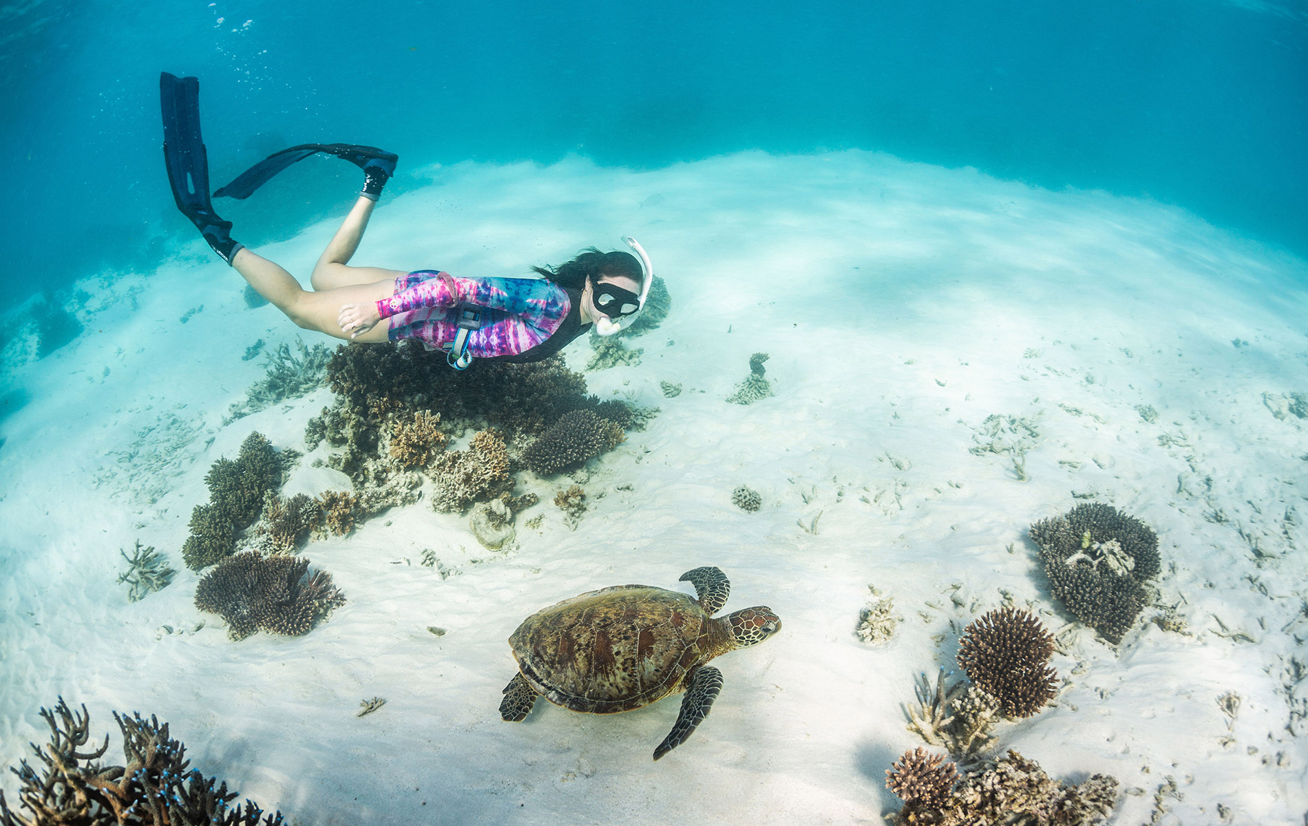 Jo swimming with a turtle