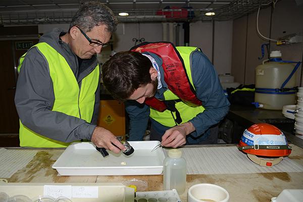 Daniel Cohen visibly inspecting a specimen
